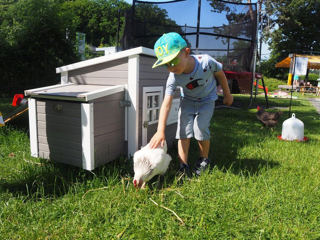 Die zutraulichen Hühner ließen sich von den Kindern sogar streicheln.